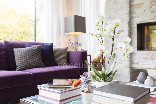 Books, succulents and orchid on living room coffee table — Stock Photo