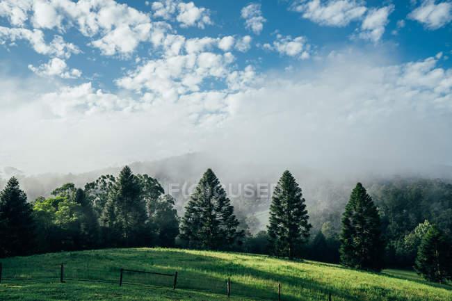 Tranquil scene fog break over sunny green trees Taree Australia — Stock Photo