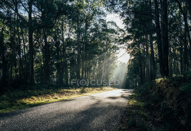 Sunshine over trees and road in remote woods Australia — Stock Photo