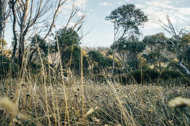 В национальном парке Австралии среди деревьев растут дикие цветы — стоковое фото