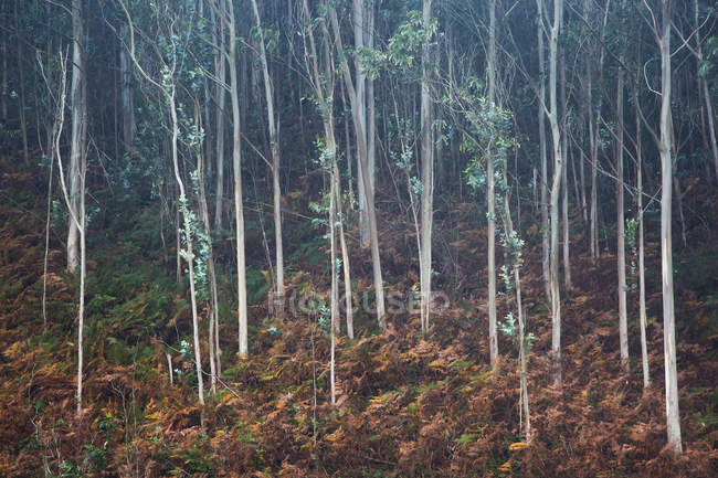 Leaves growing on sapling trees in woods — Stock Photo