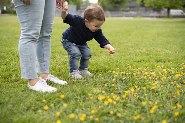 Cute innocent toddler girl picking flowers in park grass — Stock Photo