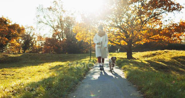 Молода жінка, що вигулює собаку в парку сонячної осені. — стокове фото
