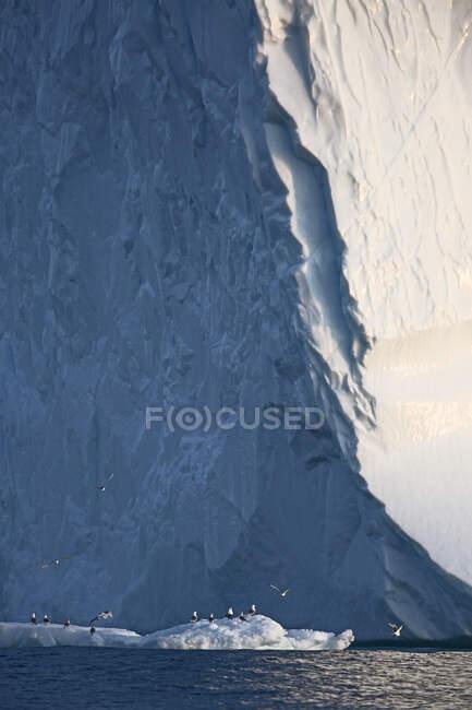 Aves abaixo iceberg Groenlândia — Fotografia de Stock