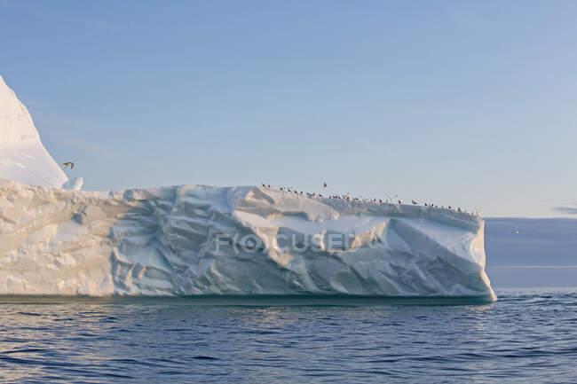 Aves que se reúnem no topo do iceberg no Oceano Atlântico Gronelândia — Fotografia de Stock