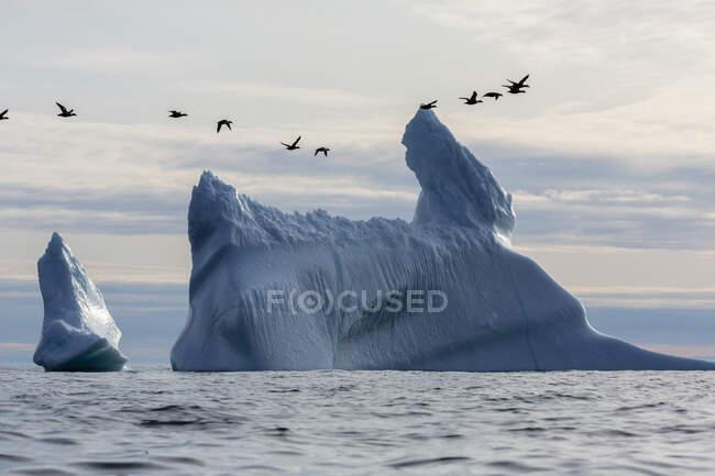 Aves voando sobre icebergs no Oceano Atlântico Groenlândia — Fotografia de Stock