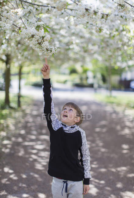Boy reaching for apple blossoms on tree in park — Stock Photo