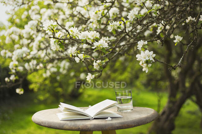 Book and water on table below flower tree in garden — Stock Photo