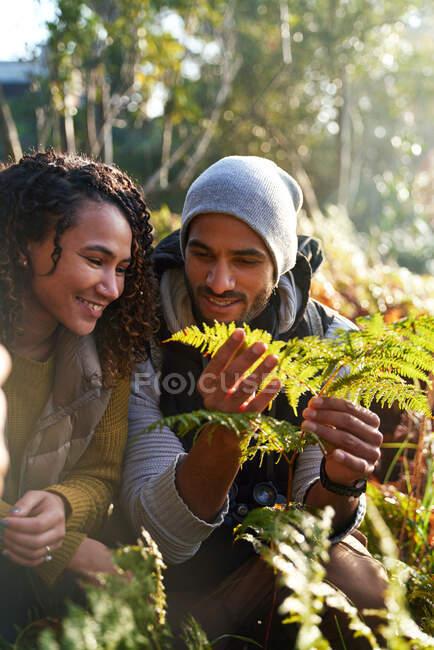 Feliz joven senderismo pareja examinando helechos hojas — Stock Photo