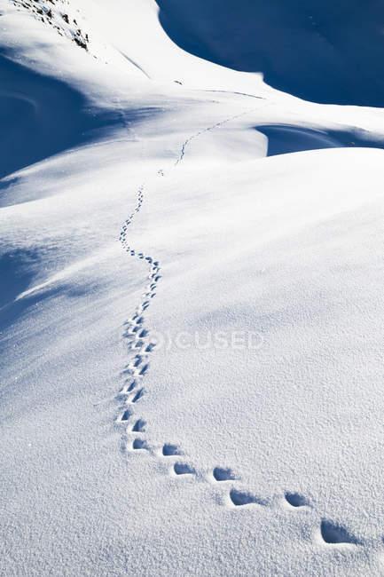 Следы тропа в снежном склоне — стоковое фото