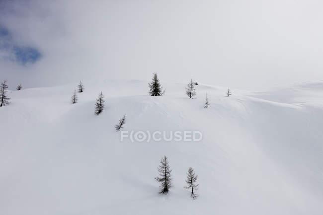 Vista diurna de árvores na neve coberta encosta da montanha, Dolomitas, Itália — Fotografia de Stock