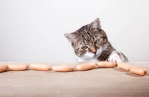 Cat temptation, cat at table stealing at meat sausages — Stock Photo