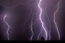 Purple rainy sky with lightnings and thunderstorm at night, tree on horizon — Stock Photo