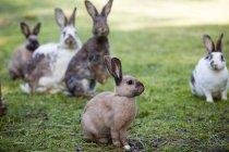 Группа различных зайчики на открытом воздухе на зеленой траве — стоковое фото