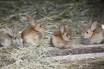 Group of adorable fluffy bunnies in farm on hay — стоковое фото