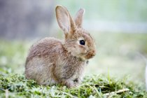 Adorable fluffy bunny on green grass, full length — Foto stock