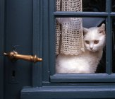 White cat sitting on window sill and looking — Stock Photo