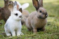 Группа очаровательные пушистые кролики на открытом воздухе на зеленой траве — стоковое фото