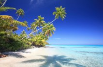 Polynesia sandy beach  with palms trees and blue ocean water — Stock Photo