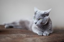 Katze liegt auf Holzoberfläche und entspannt — Stockfoto