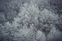 Schneebedeckte Bäume Laubwald, full-frame — Stockfoto