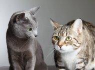 Дві кішки цікавість і очікування — стокове фото