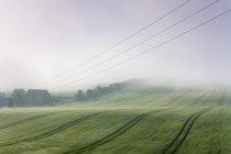Утренний пейзаж в тумане — стоковое фото
