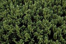 Зеленая трава листья, полный кадр — стоковое фото