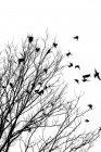 Стая птиц, летящих в дерево зимой — стоковое фото