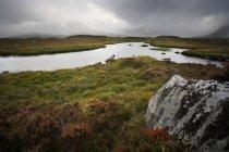 Горы озеро в пейзаж Шотландии — стоковое фото
