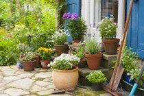 Plantes en pot à la maison de village — Photo de stock