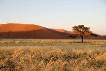 Hierba de la sabana marrón en el desierto de Namibia con colinas - foto de stock