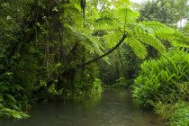 Jungle forest with fern leaves and river in rainy weather — Stock Photo