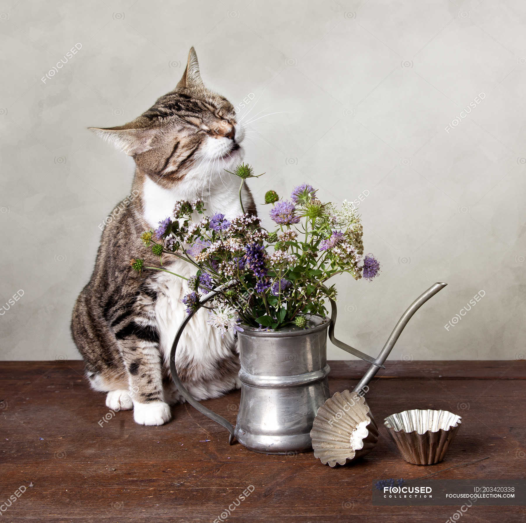 Domestic Cat Smelling Bouquet Of Flowers In Iron Teapot Table With