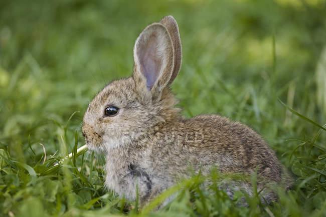 Очаровательны пушистого кролика на зеленой траве, полная длина — стоковое фото