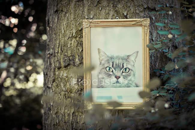 Retrato de gato no frame de retrato pendurado na casca de árvore, memória — Fotografia de Stock