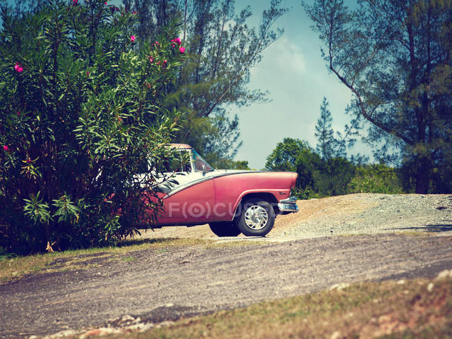 Pink retro car behind green bush outdoors — Stock Photo