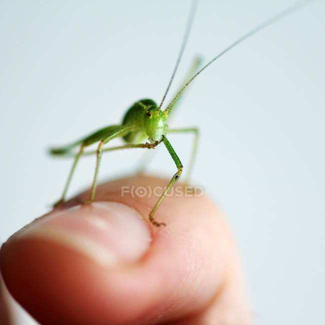 Macro shot of green grasshopper on human finger — Stock Photo