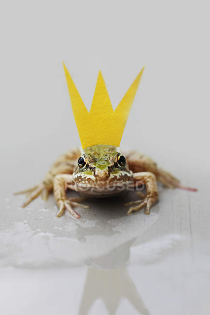 Small green frog with yellow paper crown — Stock Photo