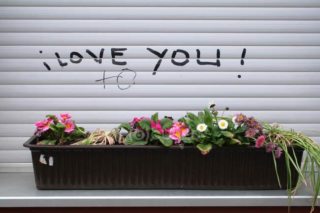 Fiori in vaso alla finestra con messaggio ti amo — Foto stock