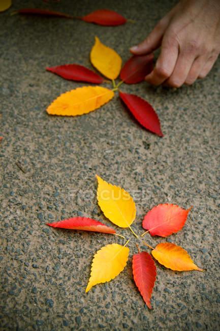 Частичный вид человеческой руки, собирающей осенние листья — стоковое фото