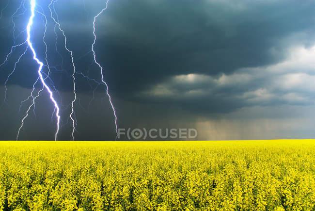 Céu chuvoso com relâmpagos e nuvens escuras acima do campo de flores amarelas — Fotografia de Stock