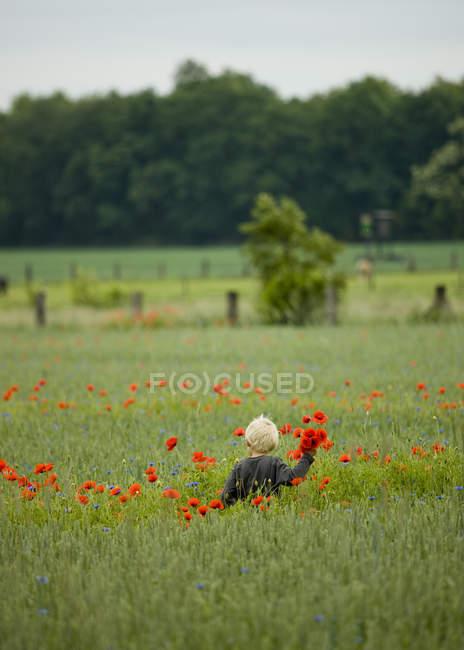 Резервного зору хлопчик, збирати червоні квіти маку в галузі — стокове фото