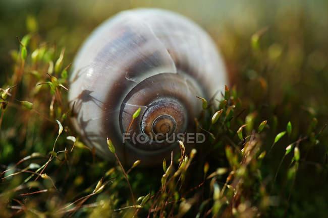 Choux de coquille d'escargot en plante verte — Photo de stock