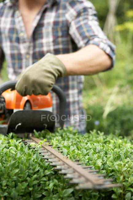 Folhas verdes de aparamento de homem de bush com o aparador de cerca viva elétrico — Fotografia de Stock