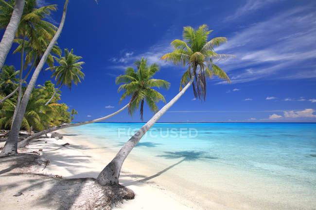 Полинезия песчаный пляж с пальмы и голубой океан воды — стоковое фото