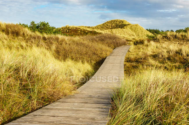 Trilha em duna com grama do marram — Fotografia de Stock