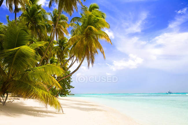 Caribbean sandy beach with palms and sea — Stock Photo