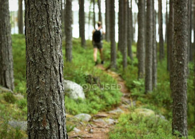 Blurred view of man walking on path in forest, hiking person — Stock Photo