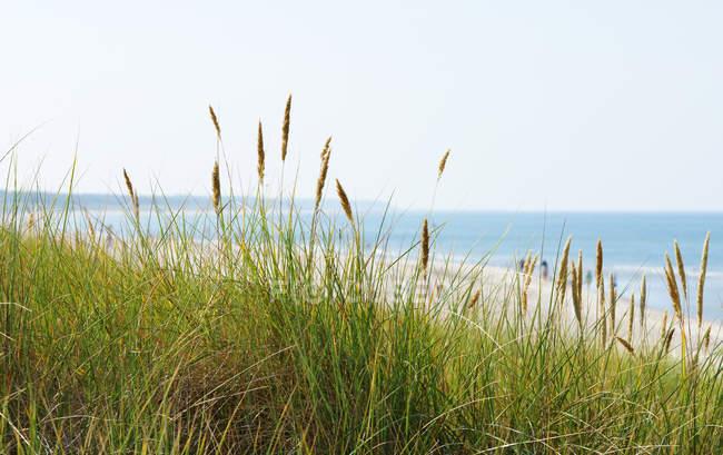 Campo de grama verde na praia de areia com água do mar — Fotografia de Stock